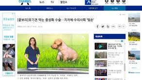 [끝보리]유기견 막는 중성화 수술…지자체·수의사회 '맞손'