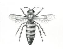 Queen Bee pencil Stu