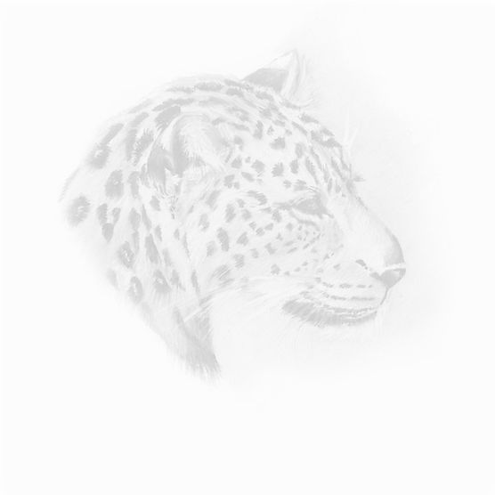 logo design, leopard watercolour - svhillustration