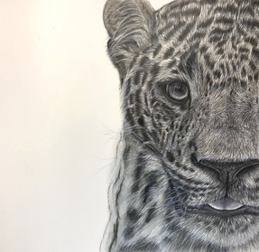 Leopard drawing with pencils on card