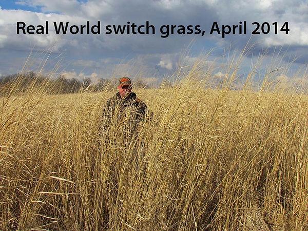 Switchgrass-pic-RW.jpg