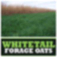 Whitetail Forage Oats.jpg