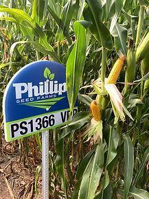 PS1366 VPR (3).JPG