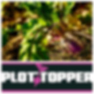 Plot Topper.jpg