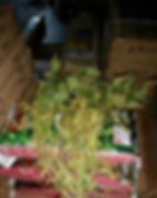 RWWP-whitetail-soy-beans-239x300.jpg