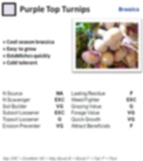 Purple Top Turnips.PNG