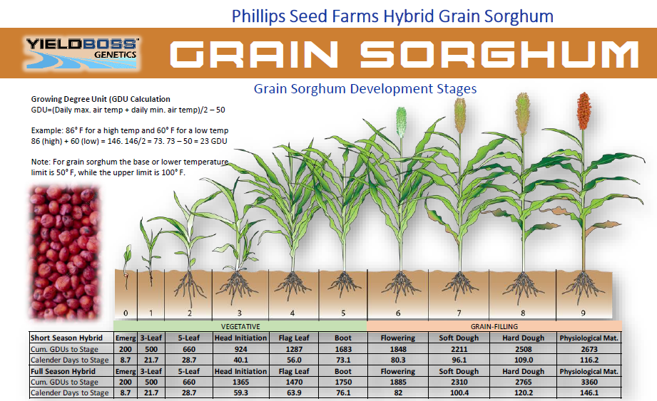 Sorghum Agronomy.PNG