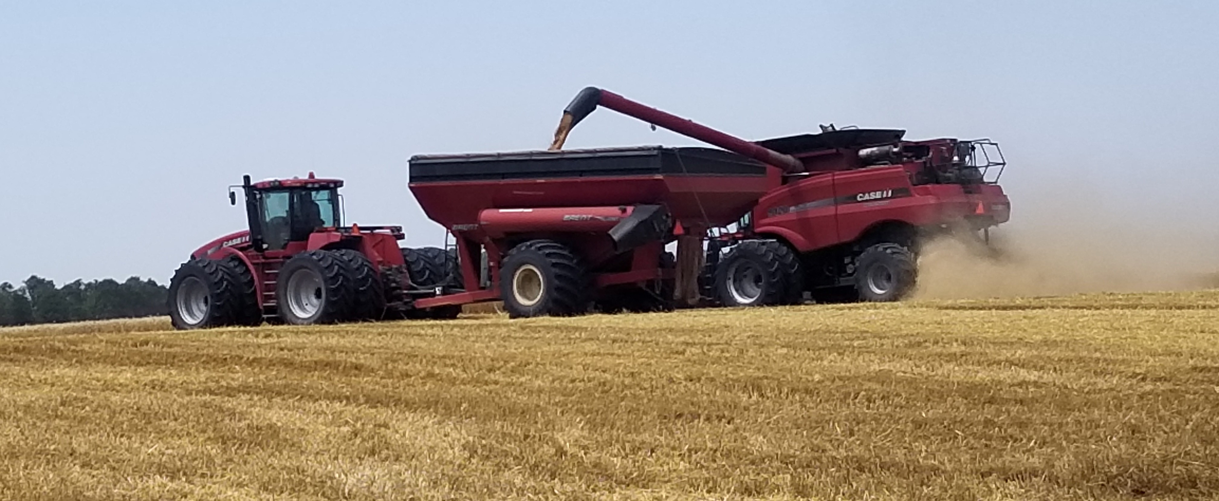 Allison Wheat Harvest Photo 2020 Landsca