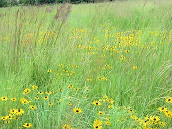 Custom Native Grass Blends.jpg