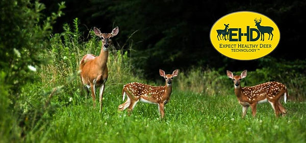 healthy-doe-and-fawns.jpg