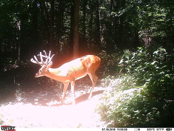 mineral-deer-6.jpg