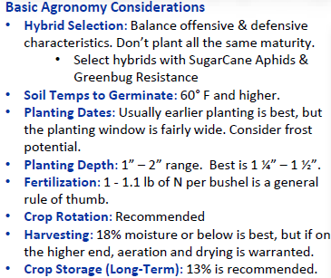 Sorghum Agronomy 2.PNG