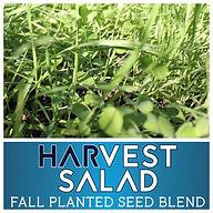 Harvest Salad.jpg