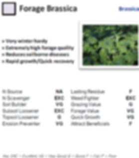 Forage Brassica.png