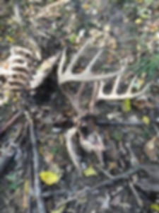 dead-EHD-Buck-225x300.jpg