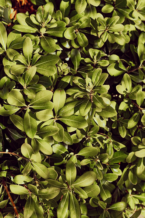 Cabane Bambou Septembre 20-120.jpg