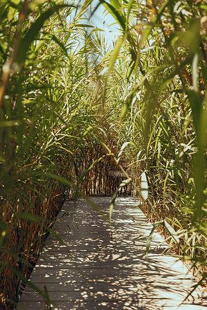 Cabane Bambou-104.jpg
