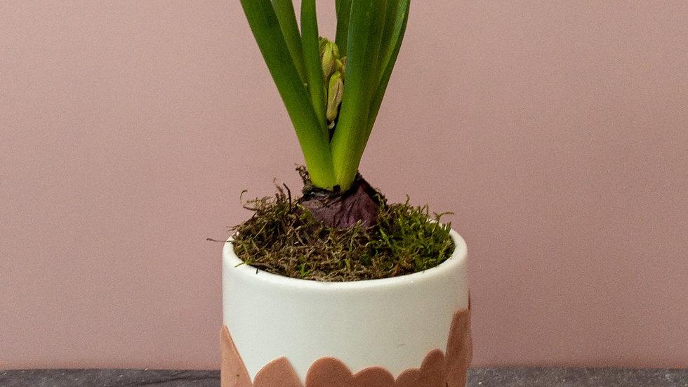 Ceramic hyacinth pot with hearts ribbon