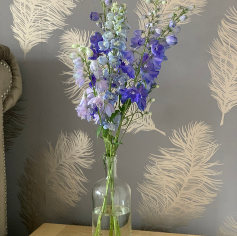 Delphiniums just hanging out