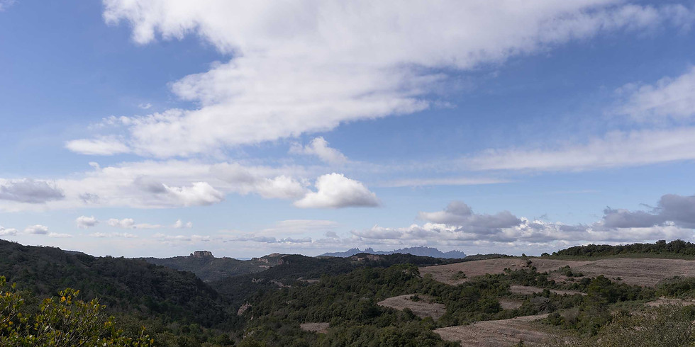 Botanical treasures of Sant Llorenç del Munt i l'Obac - Hiking