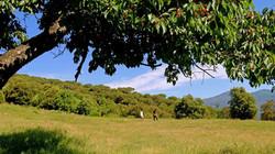 Enjoy nature