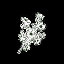 Flower%20Branch%20_edited.png