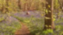 Norsey Wood.jpg