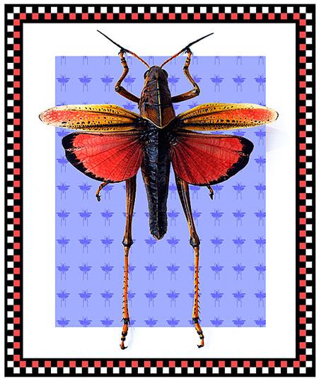 GrasshopperLaser.jpg