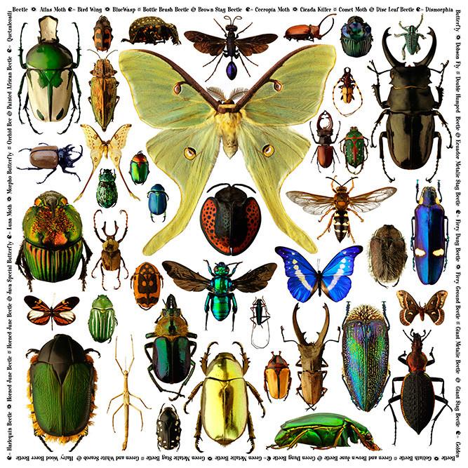BugPuzzle.jpg