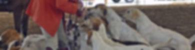 hunt banner.jpg