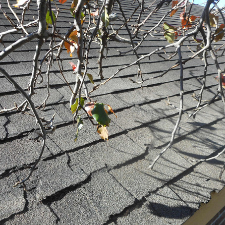 Common Issues: Trees and roof damage