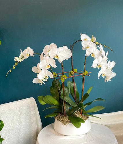 All U Want - Custom Designed Orchids