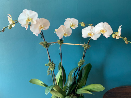 HOW TO GROW ORCHID