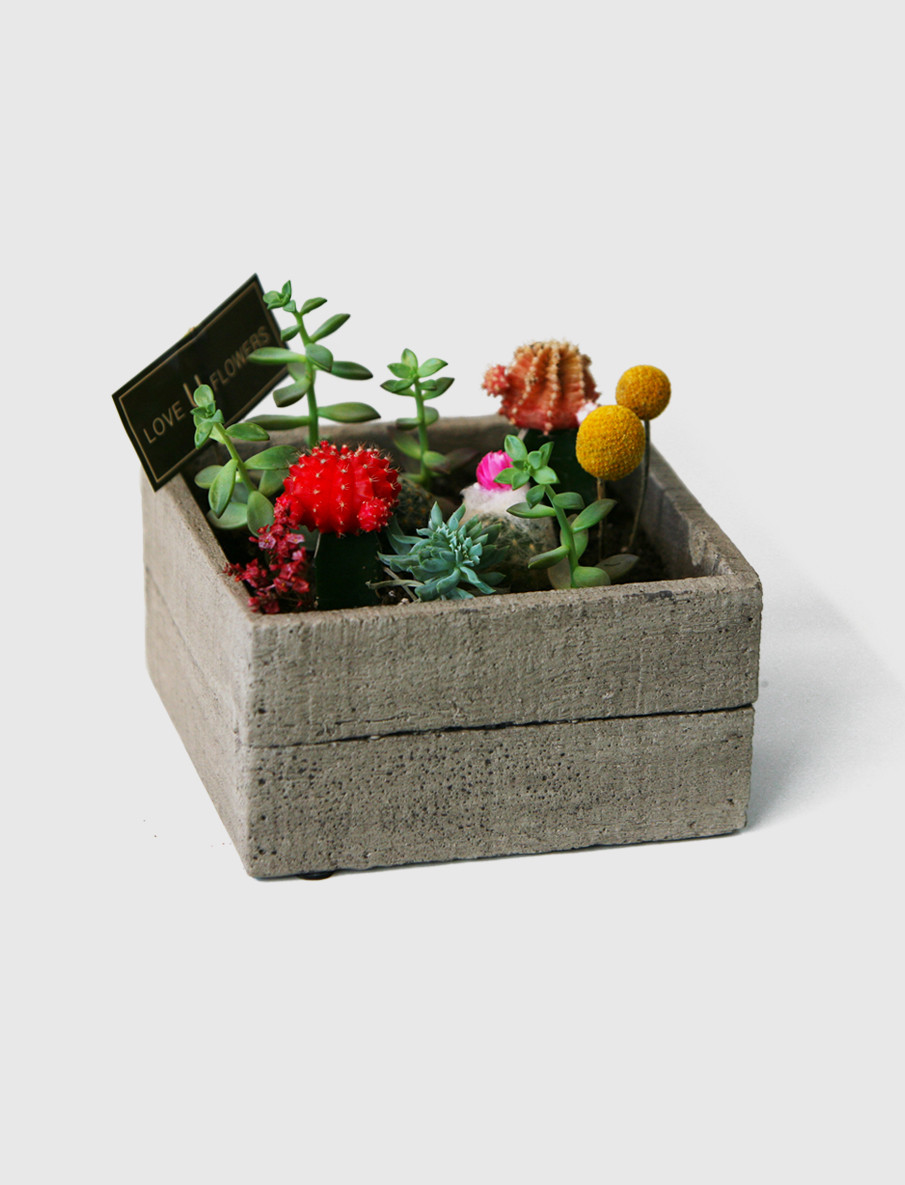Unique Cactus and Succulent arrangements will make a great gift.