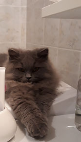 othello dans la salle de bain.jpg