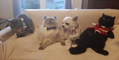Owen et sa nouvelle famille au complet.j