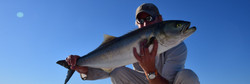 Bluefish 2
