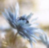Spring 19 88ab.jpg
