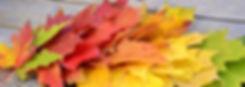 leafs.jpg