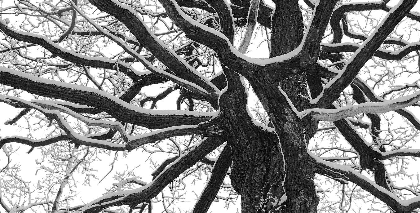 treewithsnow.jpg