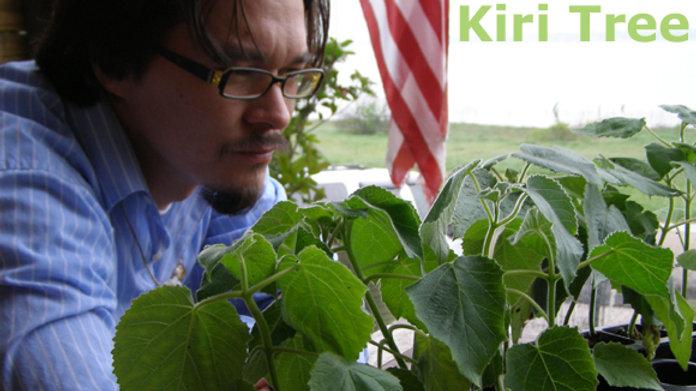 Kiri Tree