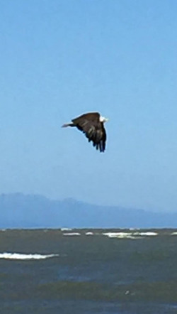 Eagle foreshadowing future Eagles!