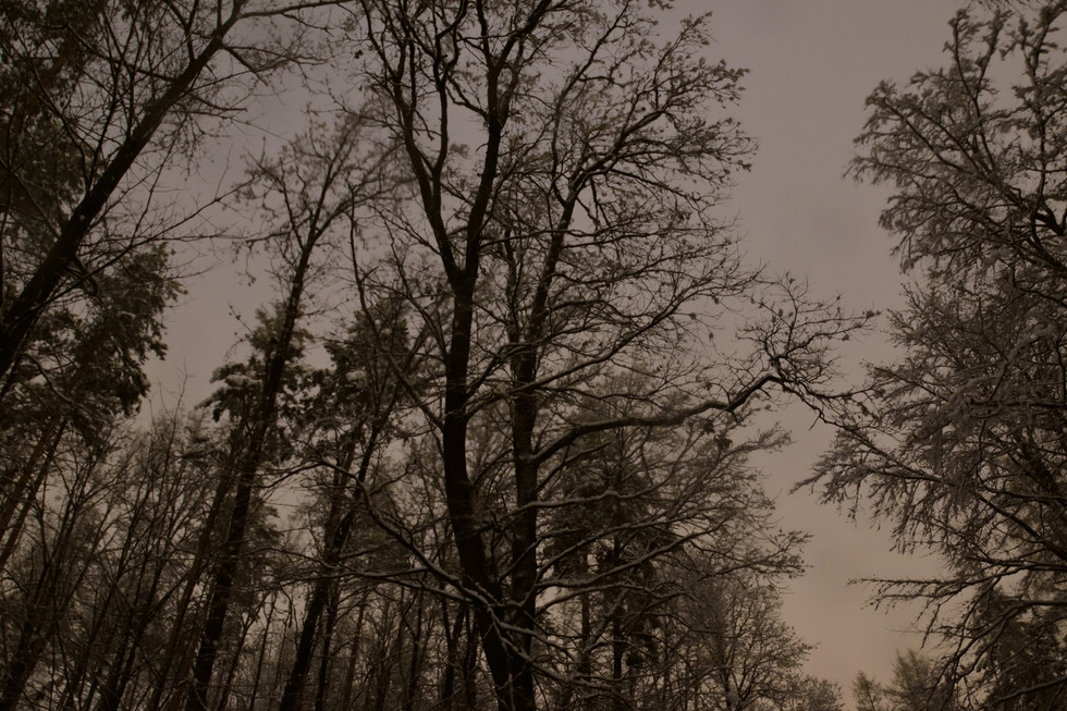Bäume im Wald zwischen Berreuth und Paulsdorf