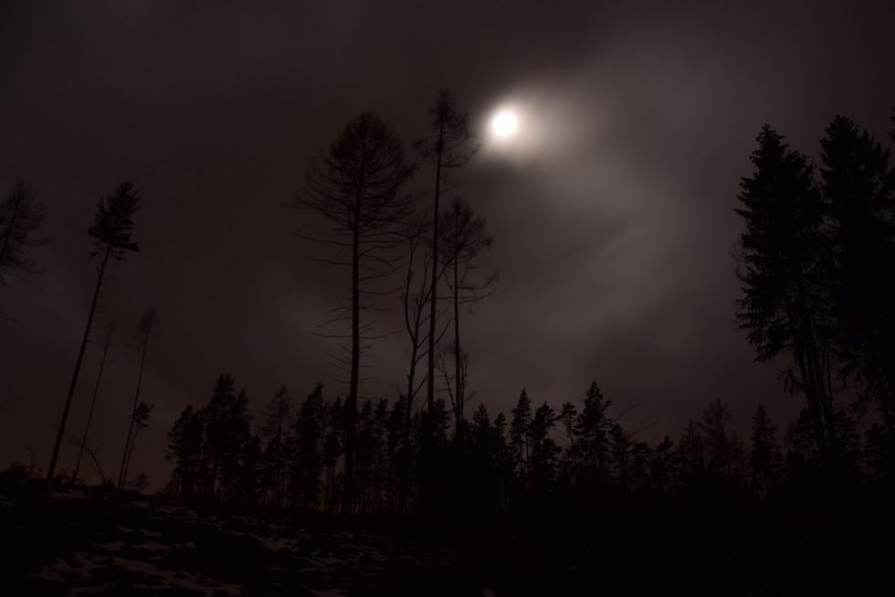 nächtlicher Mond mit Lärchen, Schulweg von Paulsdorf nach Berreuth, Langzeitbelichtung, Anfang 2021