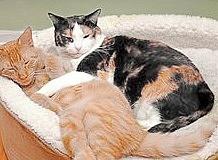 Zazzy and Cuddles