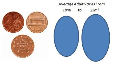 Testicular size adult.jpg