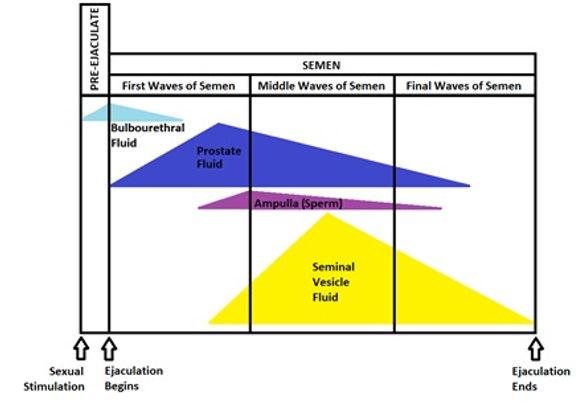 Semen Components.jpg