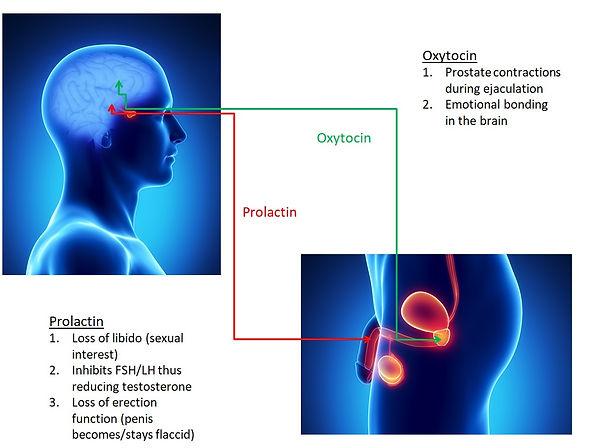 Prolactin & Oxytocin.jpg