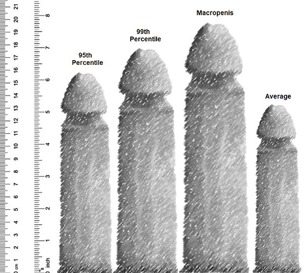 Penis Large.jpg