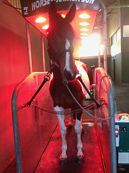 horse trainer relax powerplate